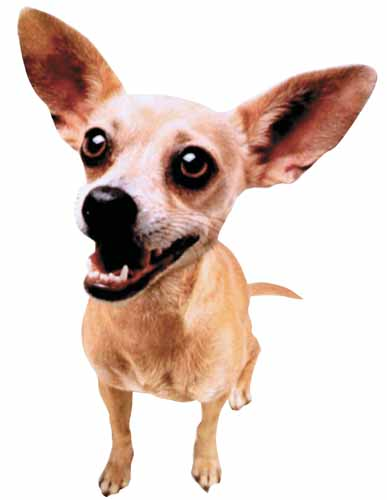 TACO BELL CHIHUAHUA File Photo